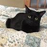 イケメン黒猫♪ サムネイル6