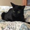 イケメン黒猫♪ サムネイル7