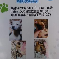 保護子犬の譲渡会