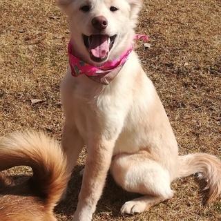 立ち耳のふわもふの可愛い仔犬