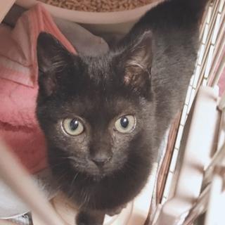 とにかく可愛い黒猫ちゃんの瑠衣君