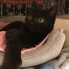 とにかく可愛い黒猫ちゃんの瑠衣君 サムネイル6