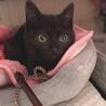 とにかく可愛い黒猫ちゃんの瑠衣君 サムネイル7