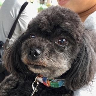 小型犬 キャンディーちゃん