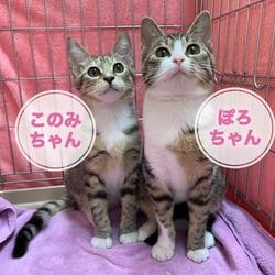 猫の里親会 in 戸越銀座商店街