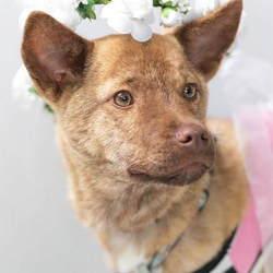 2月24日 YCDなんくる倶楽部 いのちのバトンわたす犬の譲渡会(第10回) サムネイル2