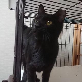 2.23藤井寺市譲渡会参加猫黒猫かりんとうちゃん