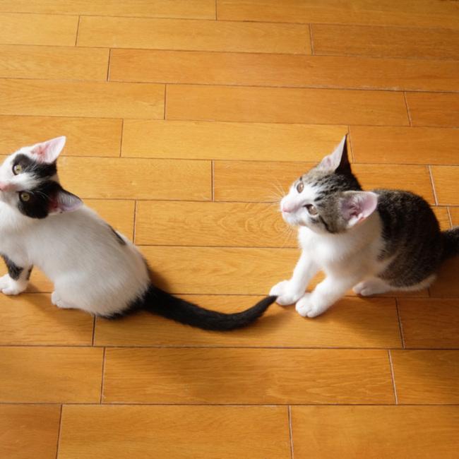 ねこっぱち(猫坂8丁目)のカバー写真