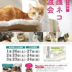 第54回 保護猫カフェくすめっと定期里親譲渡会