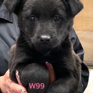 W99 とにかく、可愛い子犬です。