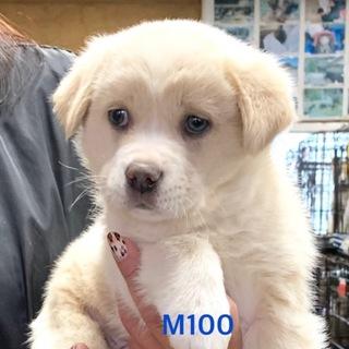M100 可愛い子犬です。