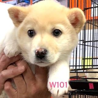 W101 可愛い子犬です。