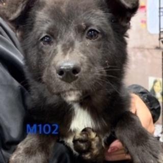 M102 可愛い子犬です。