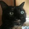 ベッタリ甘えた構ってちゃんのサビ猫さん