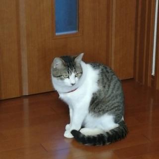 優しいネコちゃんとまったり
