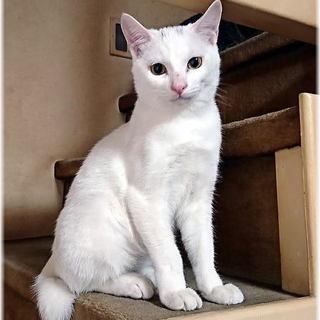 生後6ヶ月の男の子★兄弟猫①