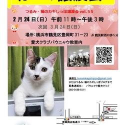 横浜 つるみ猫のカギしっぽ譲渡会 第55回