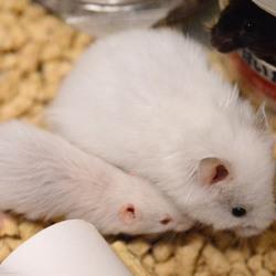 家族のネズミ4匹それぞれの近況と問題