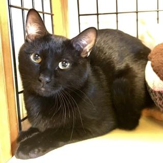 黒猫♪甘太郎くん♪8ヶ月半くらい