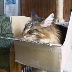 箱の中で融けてしまった猫 (笑)