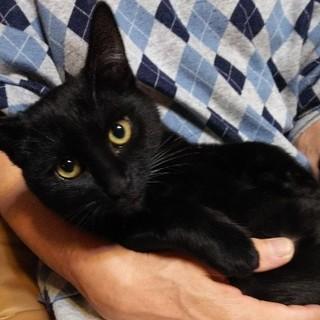 黒田りりこ 美猫な1歳4ヶ月