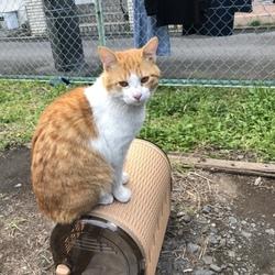 去勢手術後、地域猫に戻すという選択について