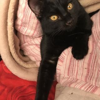 とても甘えん坊な黒猫(たんたん)