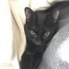 とても甘えん坊な黒猫(たんたん) サムネイル2
