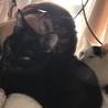 とても甘えん坊な黒猫(たんたん) サムネイル3
