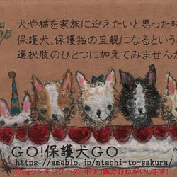 GO!の保護犬応援☆食器&陶器市(フリマ)in三島/長泉 サムネイル2