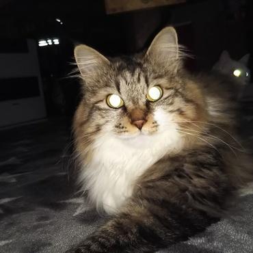 目がピカリン。暗闇の中
