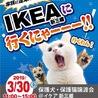 保護犬・保護猫譲渡会 IKEA新三郷