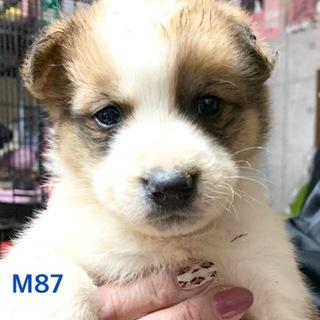 M87 可愛い子犬です。