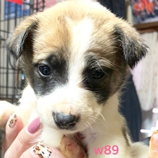 W89 可愛い子犬です。