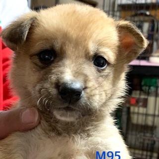 M95 可愛い子犬です。