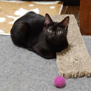 優しい黒猫クララちゃん!