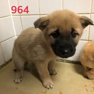 緊急。可愛い子犬たちを助けて下さい。964番