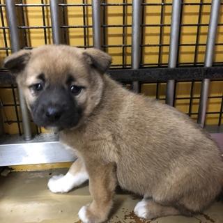 緊急。可愛い子犬たちを助けて下さい。965番