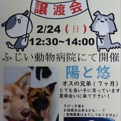 保護犬譲渡会!!