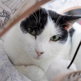 【やま子】色気漂う大人の白黒美人猫さん