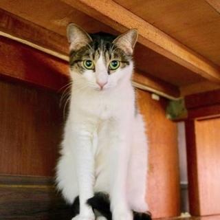 【ココナ】シャイな美猫♪
