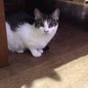 【ココナ】シャイな美猫♪ サムネイル2