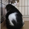 【ココナ】シャイな美猫♪ サムネイル3