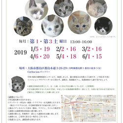 *子猫〜大人猫のネコ譲渡会* サムネイル1