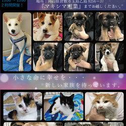 仔犬&猫の譲渡会★倉敷市玉島