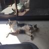 猫の開きですよー今日はサービスしますね…そろそろごはんですよね?