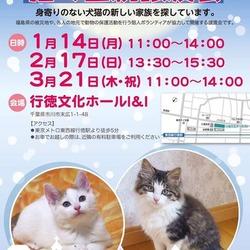 猫の里親譲渡会・ミニ報告会