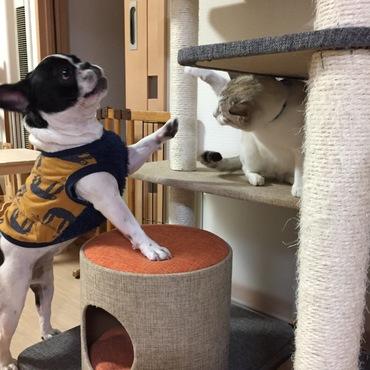 かりんちゃんの猫パンチに、あんずもわんパンチで応酬。