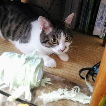 トイレットペーパーを破く・・・。