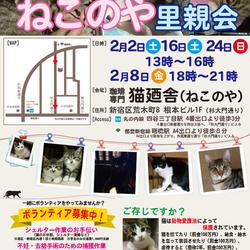 2月24日(日) 四谷猫廼舎 里親会(ボランティア募集中)